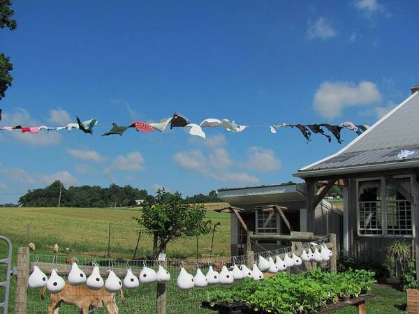 Amish Photographs Poster featuring the photograph Hung Out To Dry by Renee Holder