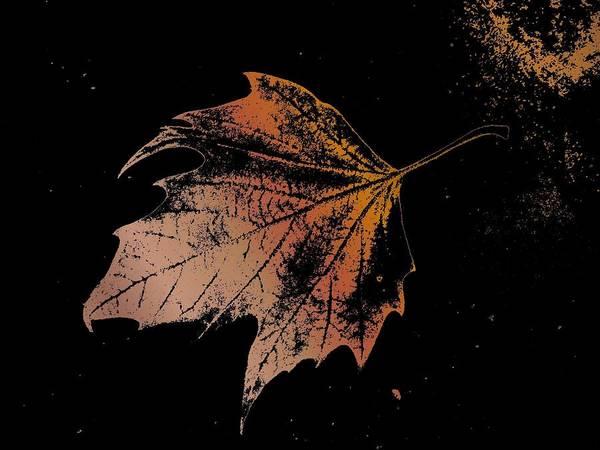 Digital Photo Manipulation Poster featuring the digital art Leaf On Bricks by Tim Allen