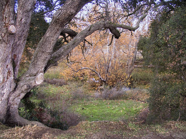 Landscape Poster featuring the photograph Sycamore Grove Fall by Karen W Meyer