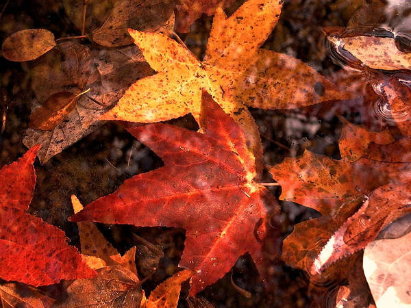 Leaves Poster featuring the photograph With Love - Autumn Pond by Theresa Asher