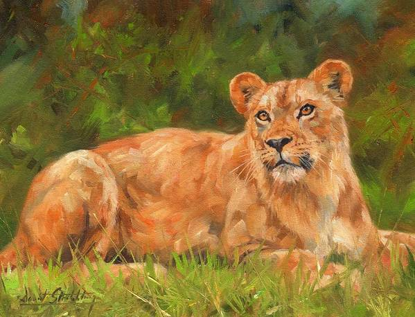 Lioness Poster featuring the painting Lioness by David Stribbling