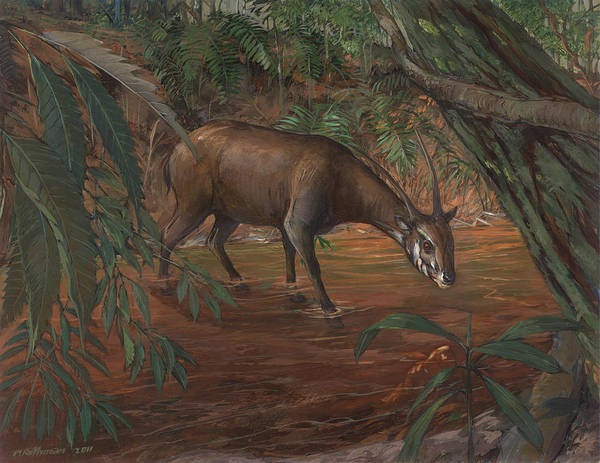 Wildlife Poster featuring the painting Saola by ACE Coinage painting by Michael Rothman