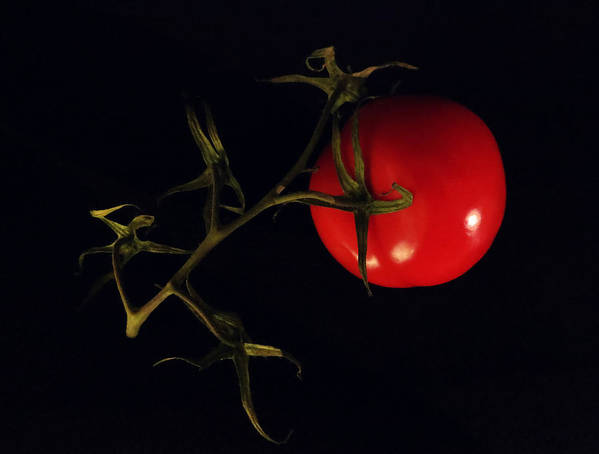 Tomato Poster featuring the photograph Tomato With Stem by Patricia Januszkiewicz