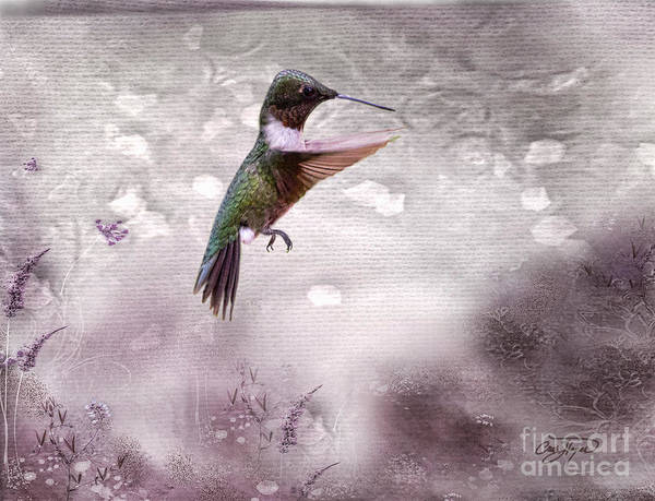 Hummingbird Poster featuring the photograph Ruby's Flight by Cris Hayes