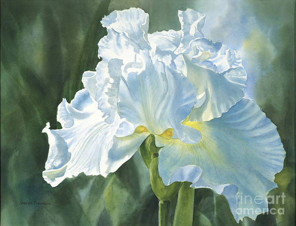White Poster featuring the painting White Iris by Sharon Freeman