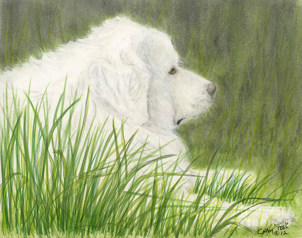 Great Poster featuring the painting Great Pyrenees Dog In Grass Animal Pets Canine Art by Cathy Peek
