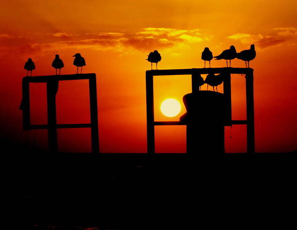 Key West Sunsets Poster featuring the photograph Goodnight Gulls by Karen Wiles