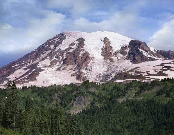 00177105 Poster featuring the photograph Mount Rainier With Coniferous Forest by Tim Fitzharris