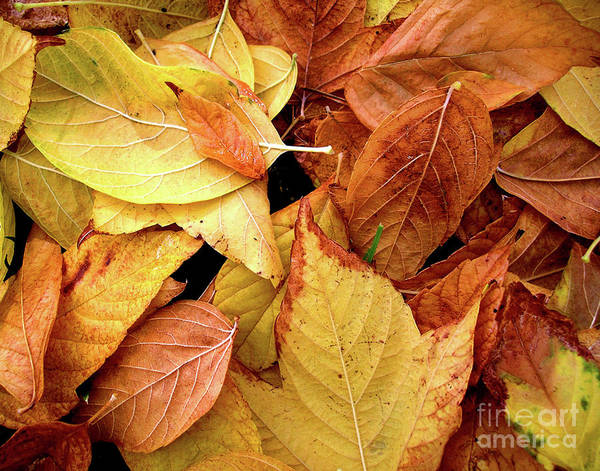 Autumn Poster featuring the photograph Autumn Leaves by Carlos Caetano