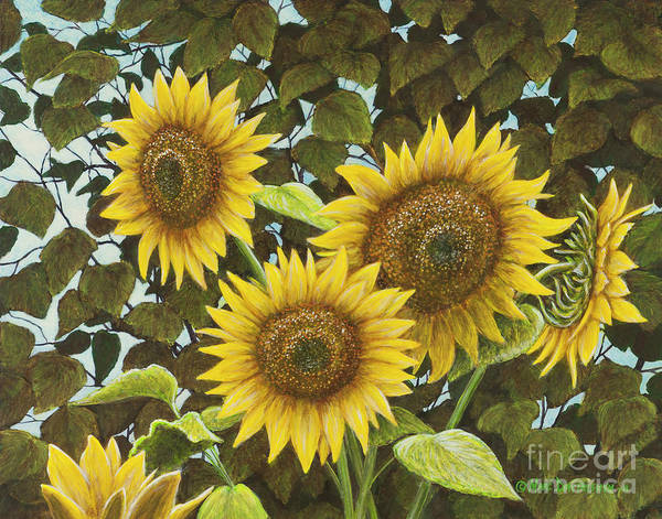 Sunflower Poster featuring the painting Summer Quintet by Marc Dmytryshyn