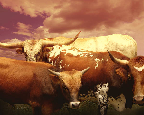 Cow Poster featuring the photograph animals - cows- Longhorns La Familia by Ann Powell