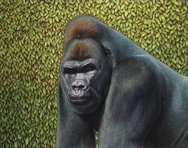Gorilla Poster featuring the painting Gorilla With A Hedge by James W Johnson