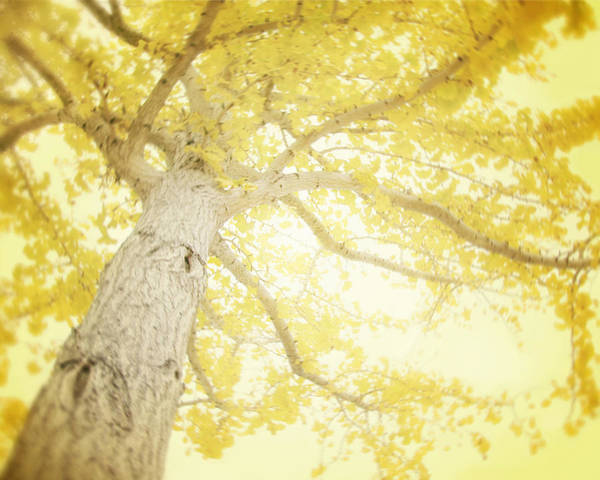 Yellow Tree Poster featuring the photograph I Will Remember You by Amy Tyler