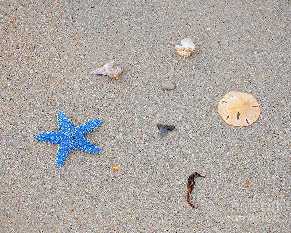 Sea Star Poster featuring the photograph Sea Swag - Light Blue by Al Powell Photography USA