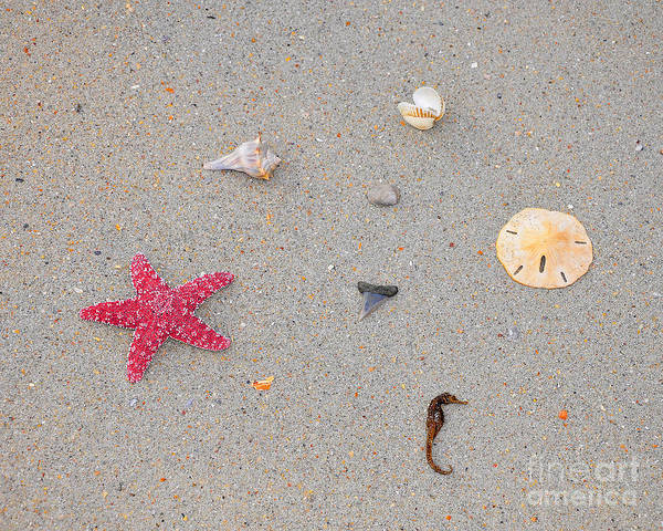 Sea Star Poster featuring the photograph Sea Swag - Red by Al Powell Photography USA
