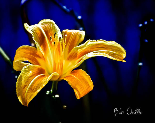Flowers Poster featuring the photograph Tiger Lily On Waters Edge by Bob Orsillo