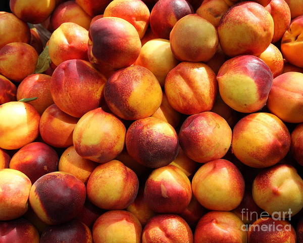 Nectarine Poster featuring the photograph Fresh Nectarines - 5d17815 by Wingsdomain Art and Photography