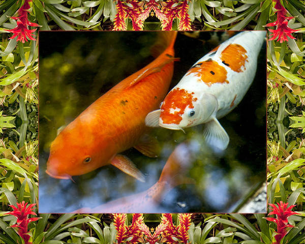 Nature Photos Poster featuring the photograph Bromeliad Koi by Bell And Todd