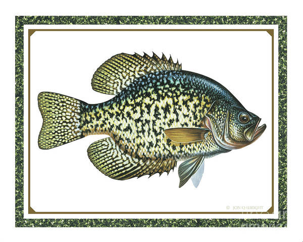 Jon Q Wright Poster featuring the painting Crappie Print by JQ Licensing