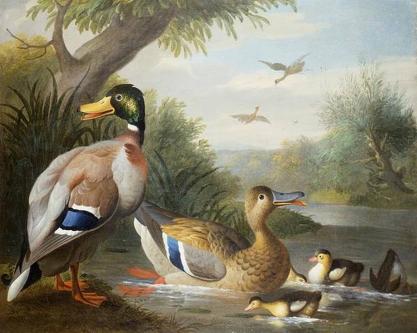 Ducks Poster featuring the painting Ducks In A River Landscape by Jakob Bogdany