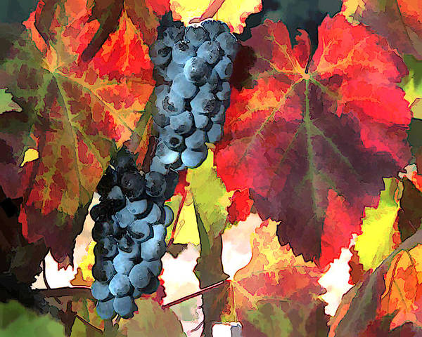 Wine Poster featuring the painting Harvest Time Grapes And Leaves by Elaine Plesser