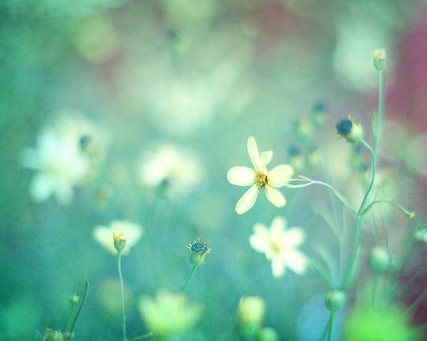 Small White Flowers Poster featuring the photograph Lovestruck by Amy Tyler