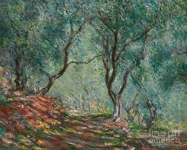 Bordighera; Italian; Landscape; Olive Grove; Path; Impressionist; French Poster featuring the painting Olive Trees In The Moreno Garden by Claude Monet