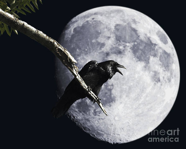 Wingsdomain Poster featuring the photograph Raven Barking At The Moon by Wingsdomain Art and Photography