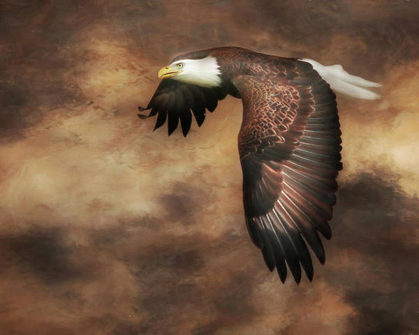 Eagle Poster featuring the photograph Textured Eagle 2 by Lori Deiter