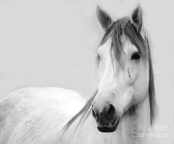 Horse Poster featuring the photograph Gracie Grey by Lynda Dawson-Youngclaus