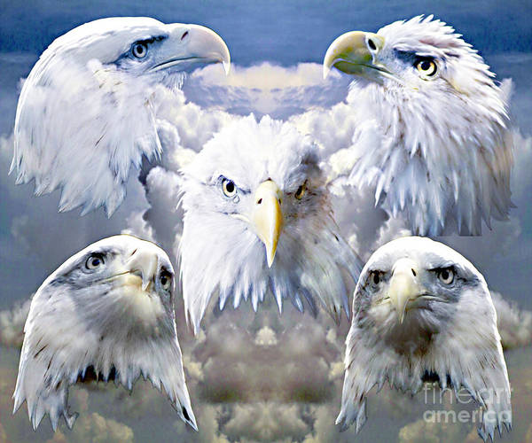 Eagle Poster featuring the photograph Eagle Moods by Ken Frischkorn