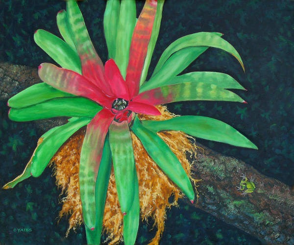 Flora Poster featuring the painting Bromeliad by Charles Yates