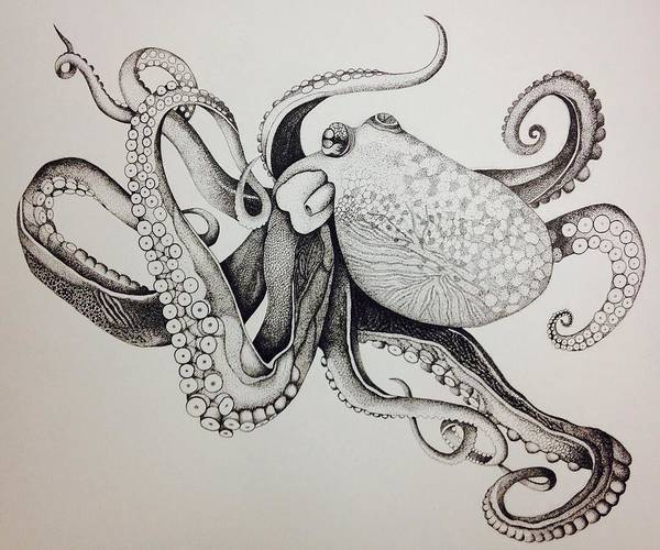 Sea Animal Poster featuring the drawing Octo by Chaelin Lee
