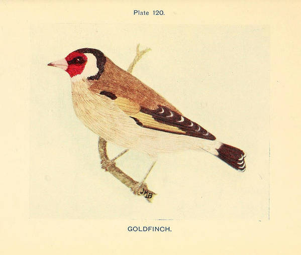 Goldfinch Poster featuring the painting Goldfinch by Philip Ralley