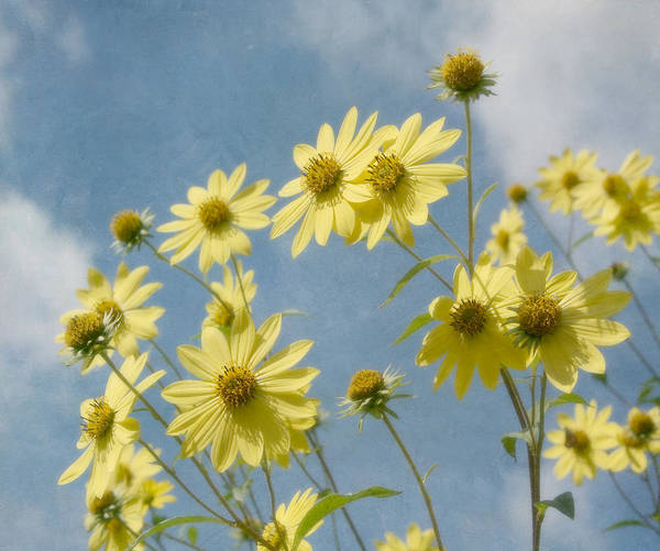 Yellow Flower Poster featuring the photograph Reaching To The Sun by Kim Hojnacki