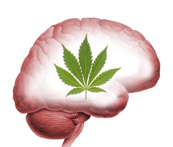 Marijuana Poster featuring the photograph Cannabis Use, Artwork by Victor De Schwanberg