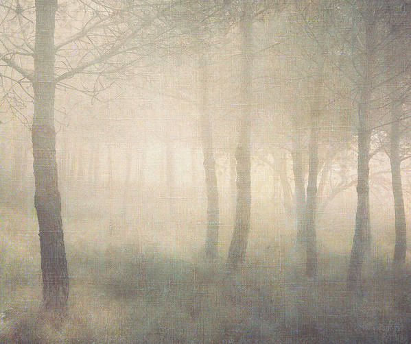 Horizontal Poster featuring the photograph Trees In Mist On Linen by Paul Grand Image