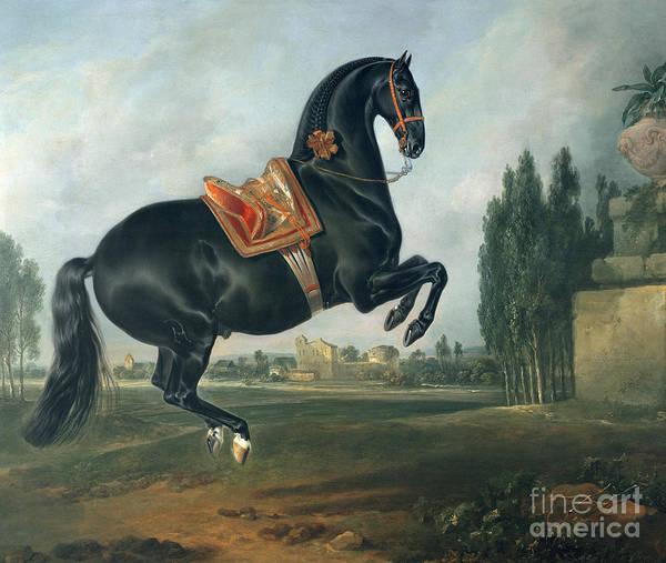 Black Poster featuring the painting A Black Horse Performing The Courbette by Johann Georg Hamilton