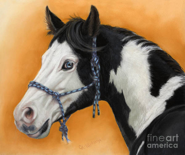 Animal Poster featuring the painting American Paint Horse - Soft Pastel by Svetlana Ledneva-Schukina