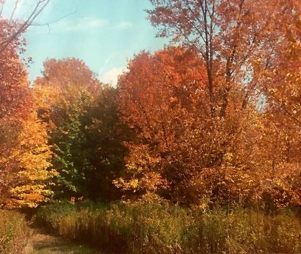 Poster featuring the photograph Autumn Woods by Jo Ann Farabee