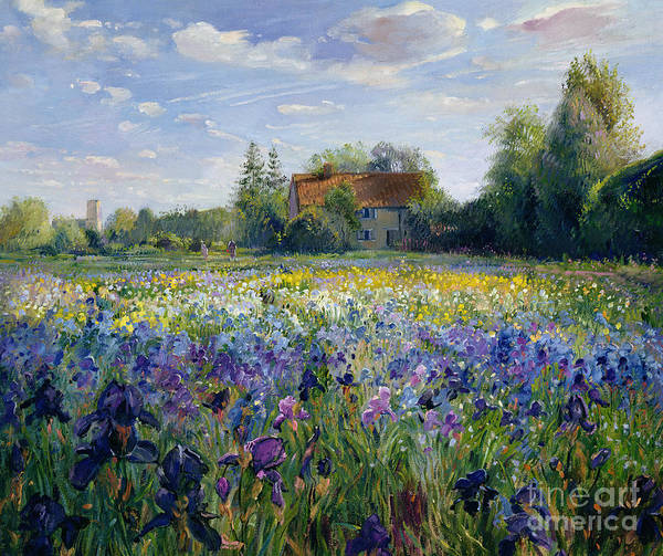 Landscape; Market Gardening; Flowers; Horticulture;cottage; Summer; Rural; Irises; Landscapes Poster featuring the painting Evening At The Iris Field by Timothy Easton