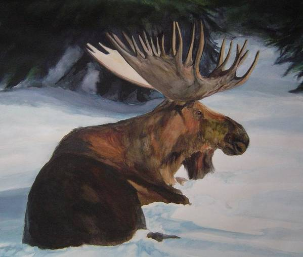 Moose Lying In Snow Watercolour Poster featuring the painting Moose In Winter by Susan Tilley