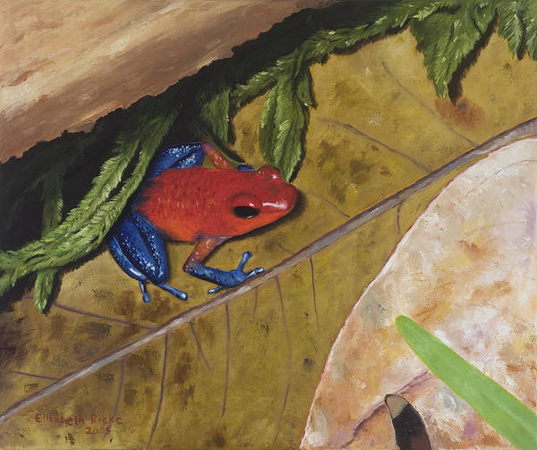 Poison Dart Frog Poster featuring the painting Strawberry Poison Dart Frog by Elizabeth Rieke Hefley
