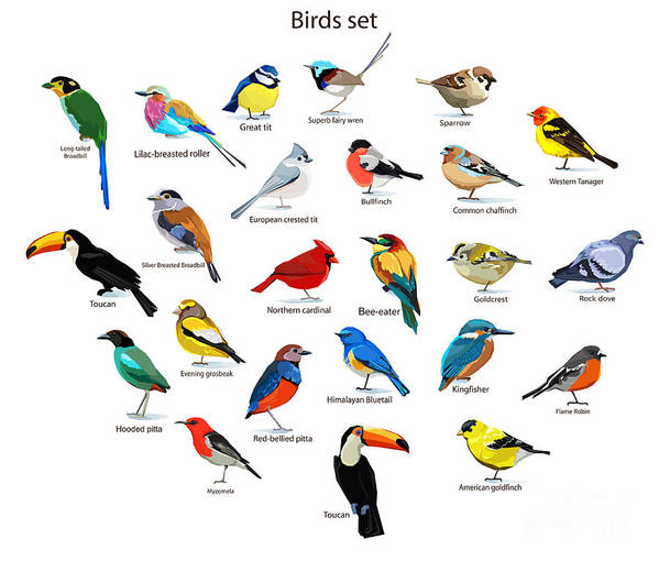 Small Poster featuring the digital art Big Set Birds. Birds Flying, Animals by Alsu Gizzatullina