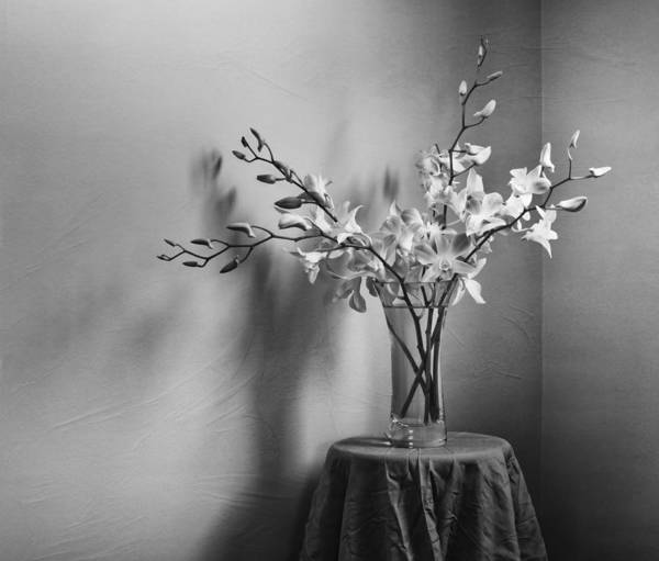 Orchid Poster featuring the photograph Beautiful Melancholy by Amy Weiss