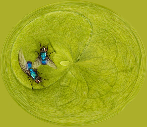 Color Poster featuring the photograph Circle Of Flies by Jean Noren