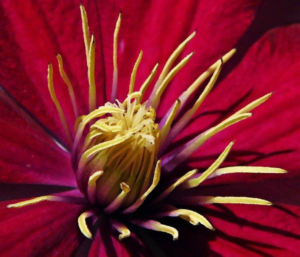 Clematis Poster featuring the photograph Clematis Center In Oils by Chris Berry