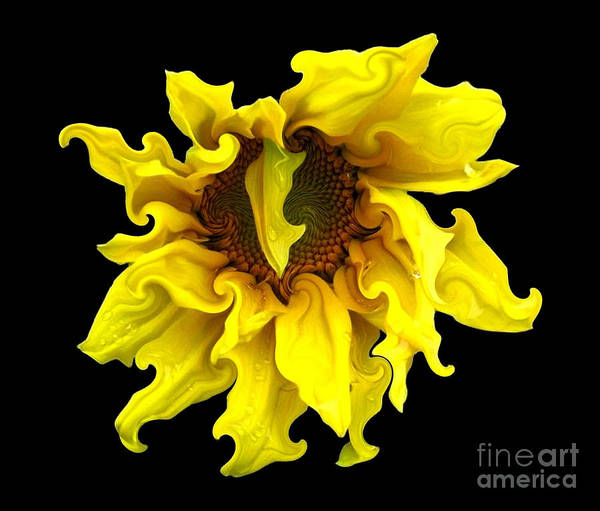 Sunflowers Poster featuring the photograph Sunflower With Curlicues Effect by Rose Santuci-Sofranko