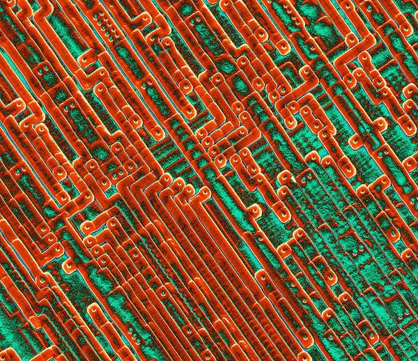 Integrated Circuits Poster featuring the photograph Microchip Circuitry, Sem by Power And Syred
