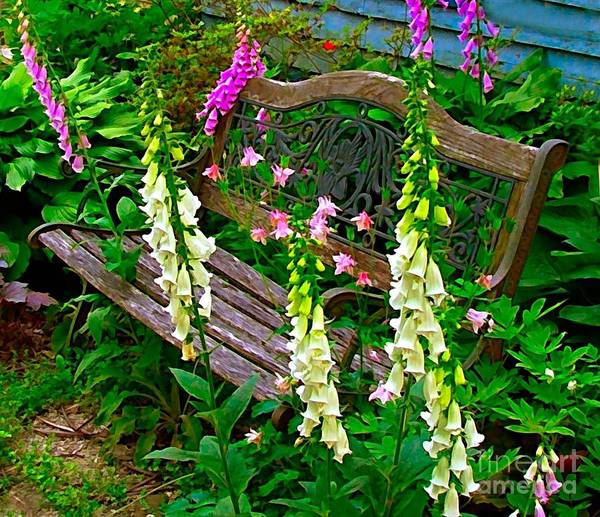 Foxglove Flowers Poster featuring the photograph Bench Among The Foxgloves by Julie Dant